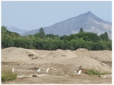 Especies de aves presentes en el lugar